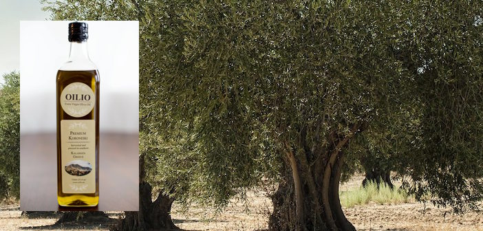 field-of-olive-trees copy